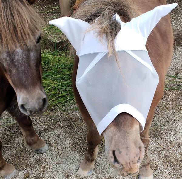 Bastelanleitung: Fliegenmaske mit Ohrenschutz für Shetlandponys ...